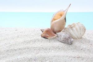 砂浜 貝殻