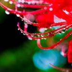 秋の長雨の意味と期間。別名はあるの?英語で表現すると?