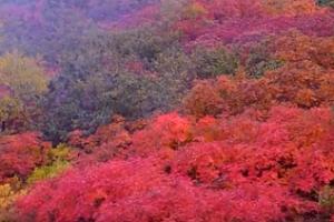 千畳敷カールの真っ赤に色づく紅葉