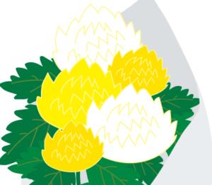 菊の花束 イラスト