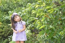 柿の木 女の子