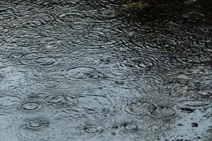 雨 水たまりの波紋