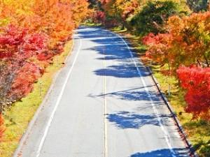 茶臼山 紅葉 道路