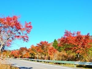 茶臼山 紅葉