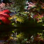 高台寺の紅葉2017の見頃とライトアップ時間。アクセス方法は?