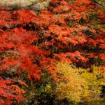 六甲山の紅葉2018の見頃時期。おすすめスポットと登山コース!