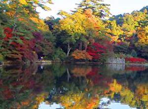 六甲山 紅葉 再度公園