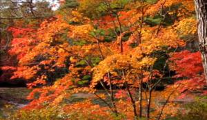 六甲山 紅葉 神戸森林植物園