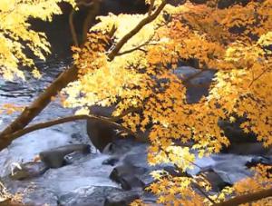 黄葉と川の流れ
