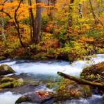 奥入瀬渓流 紅葉