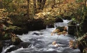 奥入瀬渓流 紅葉 阿修羅の流れ