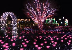 あしかがフラワーパーク イルミネーション 光の睡蓮