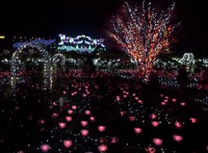 あしかがフラワーパーク クリスマスイルミネーション