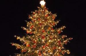恵比寿ガーデンプレイス イルミネーション クリスマスツリー