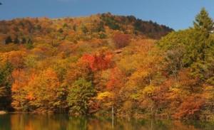 茶臼山 紅葉 矢筈池