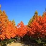 六甲山の紅葉2016の見頃時期。おすすめスポットと登山コース!