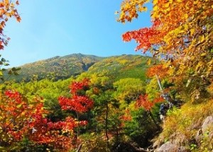 秋 紅葉 晴れ