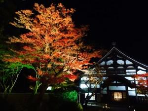 高台寺 ライトアップ 紅葉