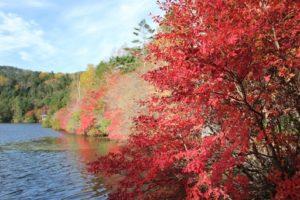 八ヶ岳高原 紅葉 白駒池