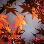 秋分の日の意味と時期。由来やお墓参りをする理由は?