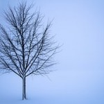 【霜が降りる条件】時期や理由は?(気温・時間帯)霜柱とは違う?