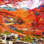 香嵐渓の紅葉2020の見頃時期は?ライトアップやもみじまつりは?混雑は?