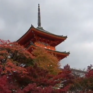清水寺 子安の塔 紅葉