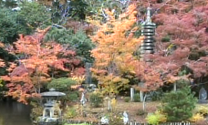清涼寺 紅葉