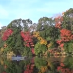 亀山湖の紅葉2017見頃時期。クルーズやハイキングで紅葉狩り!
