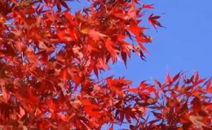 紅葉 青空