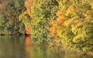 亀山湖 紅葉と黄葉