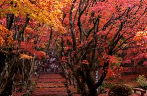 鶏足寺 真っ赤に彩られる紅葉風景