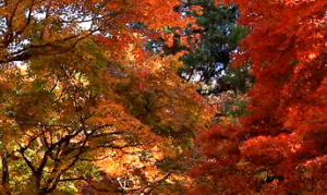 紅葉 赤 オレンジ 黄色