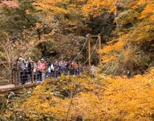 高尾山 紅葉に囲まれたみやま吊橋を渡る人々