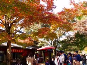 三千院 紅葉と茶屋に集まる人々