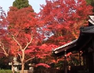 来迎院の鮮やかな紅葉