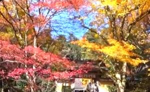 三千院 紅葉と黄葉