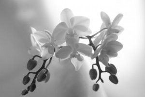 お供え花 モノクロ
