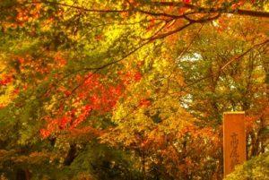 高尾山 紅葉