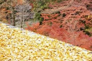 紅葉 散り黄葉