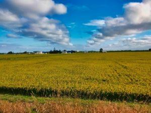 秋晴れ 広大な田んぼ