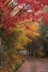 養老渓谷 紅葉 遊歩道