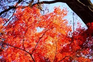 鮮やかに色づいた紅葉