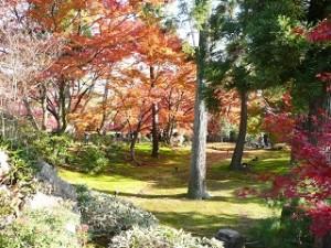 宝厳院 紅葉