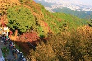 高尾山 雄大な紅葉景色