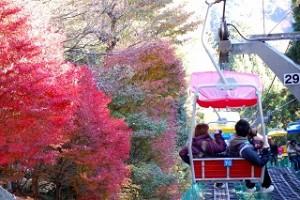 高尾山 紅葉 リフト