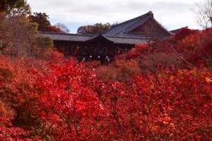東福寺 紅葉 季節