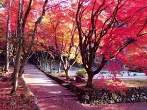 鶏足寺 真っ赤な紅葉
