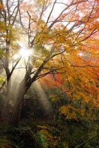 養老渓谷 紅葉 朝日