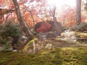 苔よ紅葉 秋景色